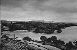 Cootes Paradise BW