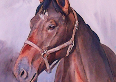affordable-horse-portrait